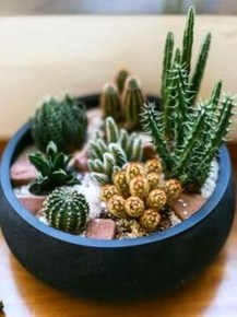 Cool Small Cactus Ideas For Home Decoration 15