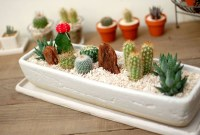 Cool Small Cactus Ideas For Home Decoration 38