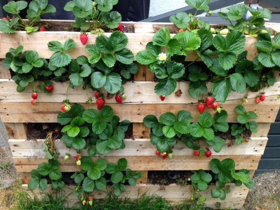 Genius DIY Projects Pallet For Garden Design Ideas 23