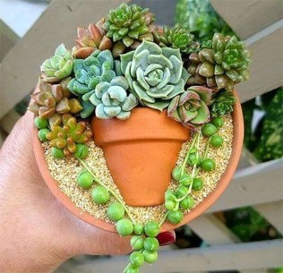 Best Ideas For Garden Succulent Landscaping 02