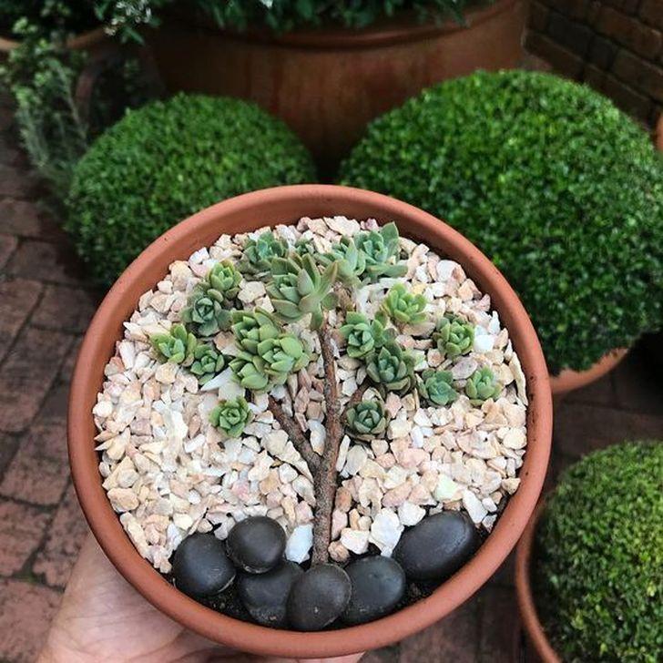 Best Ideas For Garden Succulent Landscaping 08