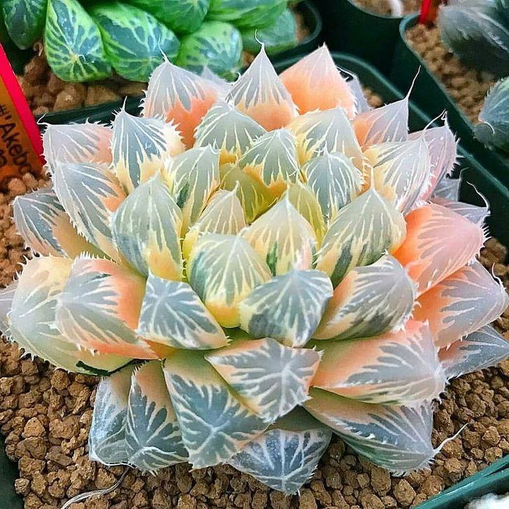 Best Ideas For Garden Succulent Landscaping 09