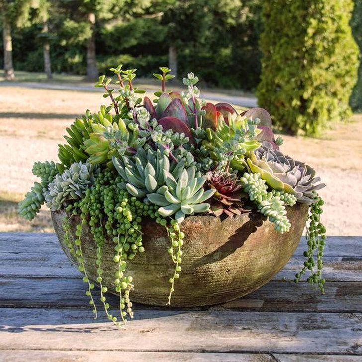 Best Ideas For Garden Succulent Landscaping 38