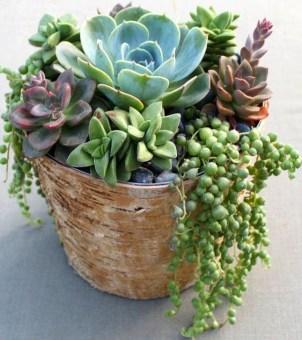 Best Ideas For Garden Succulent Landscaping 41