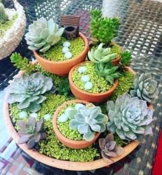 Best Ideas For Garden Succulent Landscaping 44