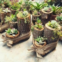 Best Ideas For Garden Succulent Landscaping 46