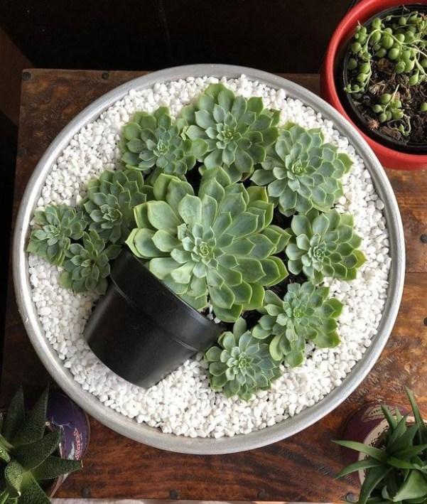 Best Ideas For Garden Succulent Landscaping 48