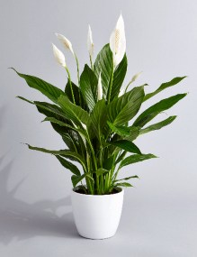 Modern Plant In Pot Ideas For Your House Decoration 05