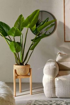 Modern Plant In Pot Ideas For Your House Decoration 17