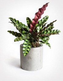 Modern Plant In Pot Ideas For Your House Decoration 21