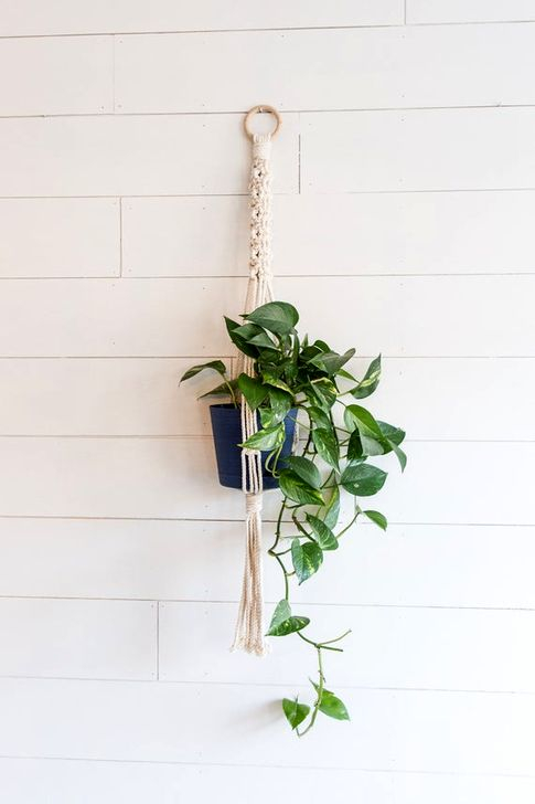 Modern Plant In Pot Ideas For Your House Decoration 24