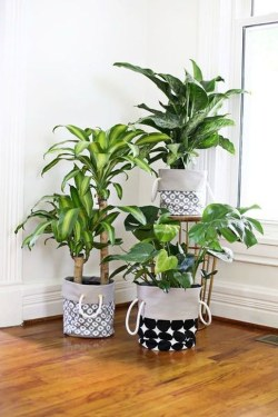 Modern Plant In Pot Ideas For Your House Decoration 27
