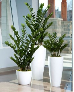 Modern Plant In Pot Ideas For Your House Decoration 30