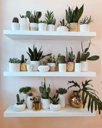 Modern Plant In Pot Ideas For Your House Decoration 42