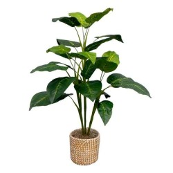 Modern Plant In Pot Ideas For Your House Decoration 43