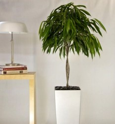 Modern Plant In Pot Ideas For Your House Decoration 44