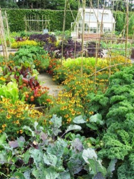 Extraordinary Vegetables Garden Ideas For Backyard 09