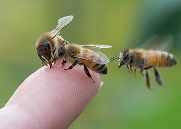three.bees.finger