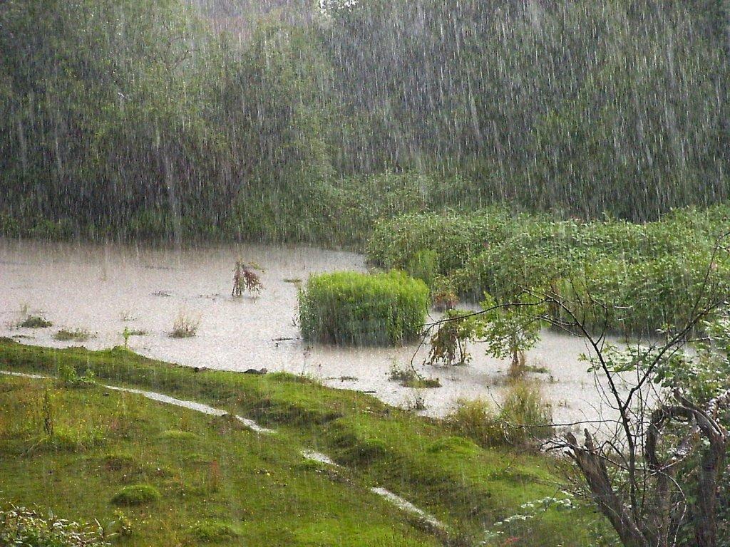 ಮಳೆ-ಹಸಿರು, Rain-Green