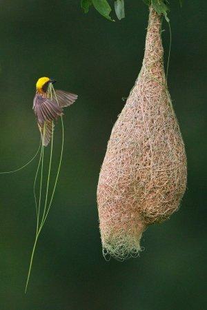 bird, nest, ಗುಬ್ಬಿ ಗೂಡು, ಹಕ್ಕಿ, ಮನೆ
