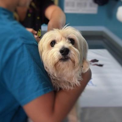 Feiten/fabels over het coronavirus en honden
