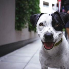 Impressie van de socialisatie van een pup