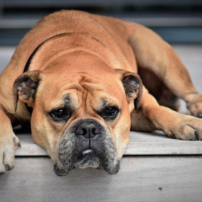 Wat doet de Corona samenleving met honden?