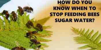 How Do You Know When To Stop Feeding Bees Sugar Water?