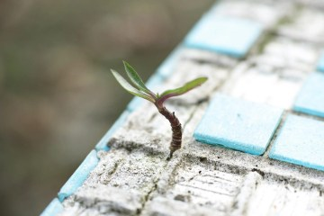 Hopeful Leafy shoot growing out of concrete