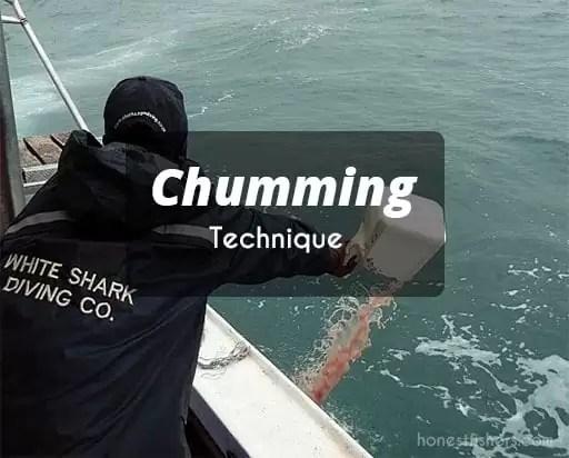 Chumming-Technique