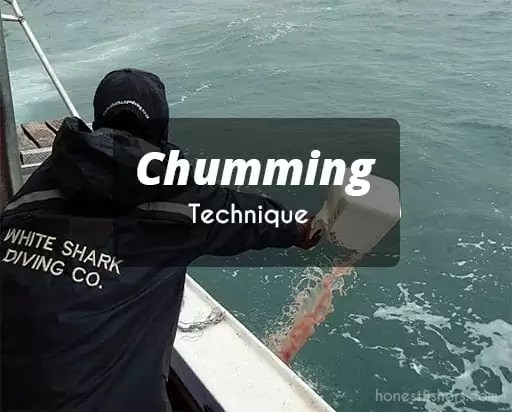 Chumming-Technique