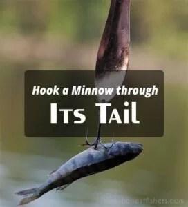 Hook a Minnow through Its Tail