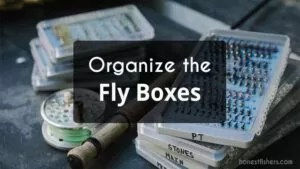 Put the Flies in a Box