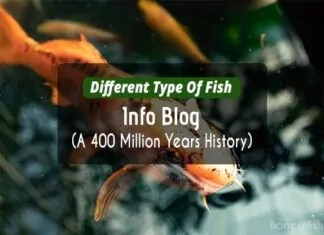 Different Type Of Fish