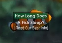 How Long Does A Fish Sleep?