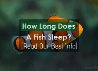 How Long Does A Fish Sleep?