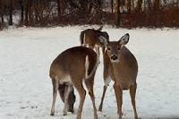 3 deer hunting