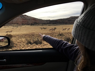 deer hunting public land strategy