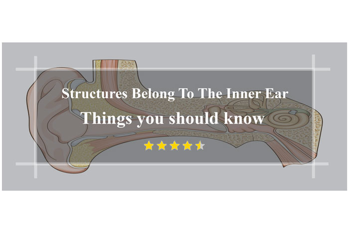 Structures-Belong-To-The-Inner-Ear