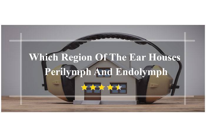 Which-Region-Of-The-Ear-Houses-Perilymph-And-Endolymph-all-details