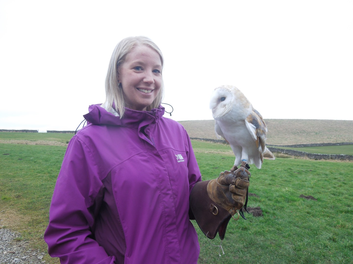 Owl & Hawk Experience at the Coniston Hotel