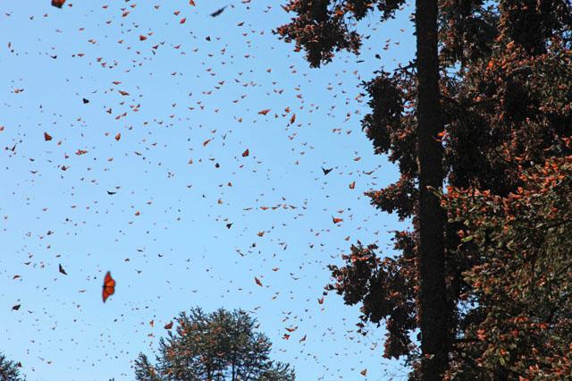 Monarch Migration  Honestly WTF
