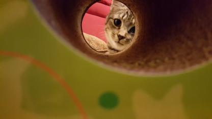 cat-scratcher1