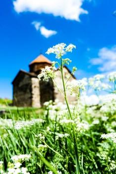 wild_flowers_in_sevanavank_monastery