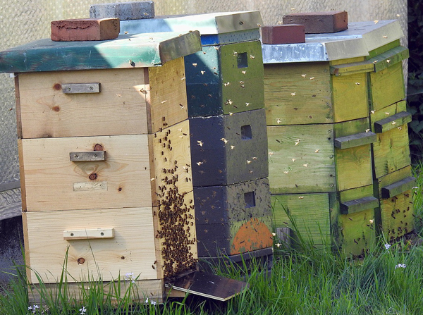 Here's a short list of bee box terminology.