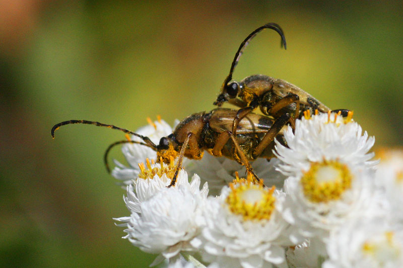 How I Photograph Bees Honey Bee Suite