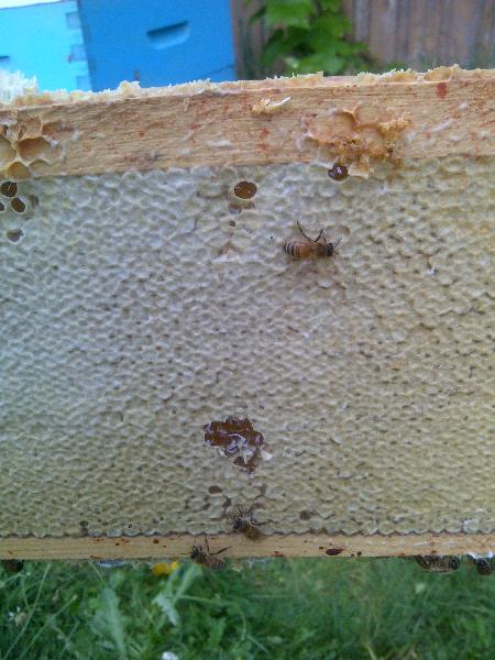 Plenty of honey. Photo by Gord Gibbings.