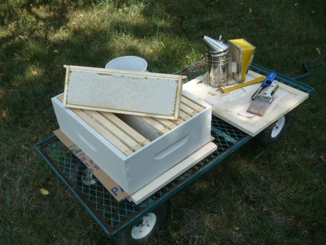 Gorgeous frames of honey ready to extract by Aaron Dionne, Michigan.