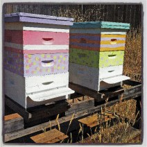"""""""Home is where the hum is."""" Hives by Marcee Pfaff."""