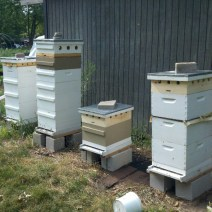 John and Sally's hives in N. Illinois.